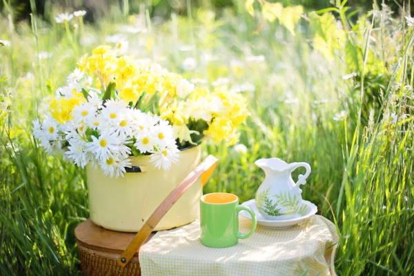 Zeleni čaj za ljepotu